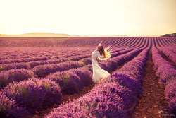 lavender field photoshoot